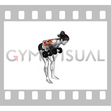 Dumbbell Palm Rotational Bent-Over Row (female)