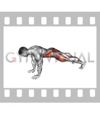 Front Plank Toe Tap (male)