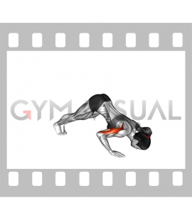 Pike Push-up (female)