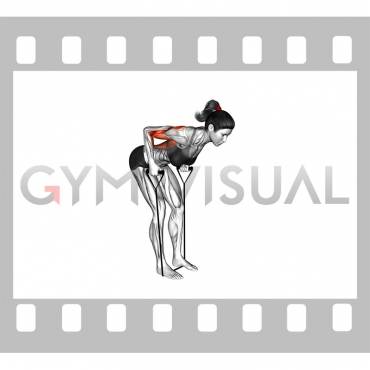 Band Bent-over Row (female)