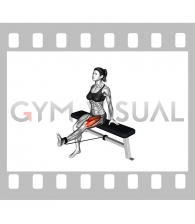 Band Seated Leg Extension (female)