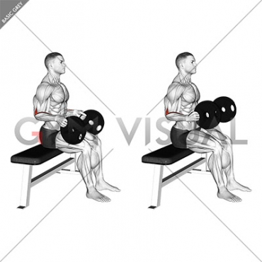 Weighted Seated Neutral Wrist Curl