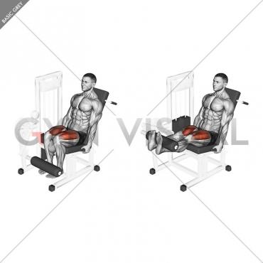 Lever Leg Extension