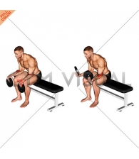 Weighted Seated Supination