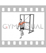 Band Alternate Low Chest Fly (male)