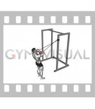 Band Cross Chest Biceps Curl (male)
