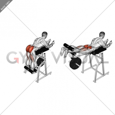 Lever Reverse Hyperextension (plate loaded)