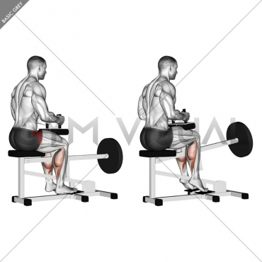 Lever Seated Calf Raise (plate loaded)