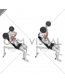 Barbell Incline Triceps Extension Skull Crusher