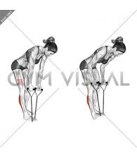 Standing Hamstring and Calf Stretch with Starp (female)