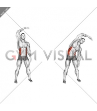 Standing Side Bend (bent arm) (male)