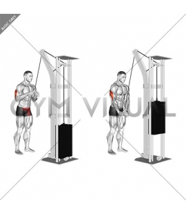Cable Triceps Pushdown (V-bar) (VERSION 2)