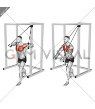 Band Low Chest Press (male)