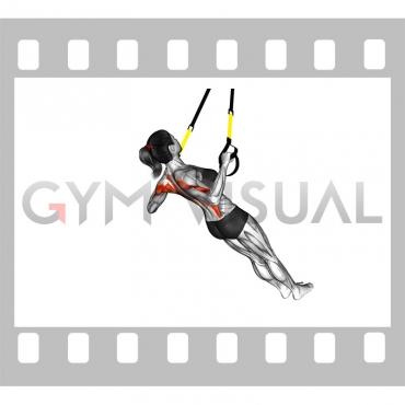 Suspender Wide Grip Inverted Row on floor (female)