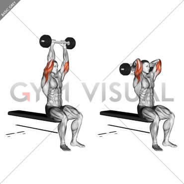 Olympic Barbell Triceps Extension
