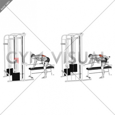 Cable Bent-Over Single Arm Neutral Grip Kickback with Rope Attachment