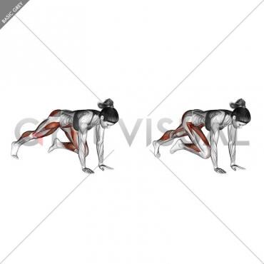 Push-up (knee chest)
