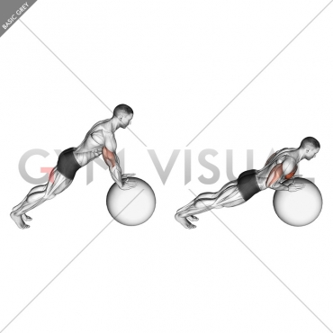 Push-up (on stability ball)