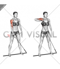 Bar Band Standing Single Arm Upright Row
