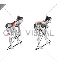 Bar Band Bent Over Row