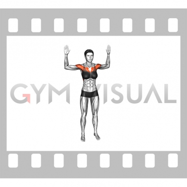 Bodyweight Standing Fly (female)