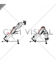 45 Degree Hip Extension Glute Focused