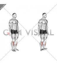 Ankle - Dorsal Flexion