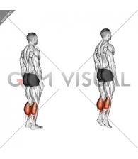 Ankle - Plantar Flexion - Articulations