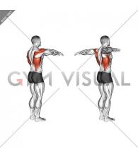 Shoulder - Transverse Extension - Articulations