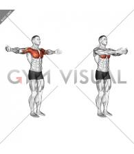 Shoulder - Transverse Flexion - Articulations