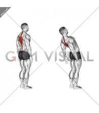 Spine (Lumbar) - Extension - Articulations