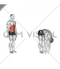 Spine (Lumbar) - Flexion - Articulations