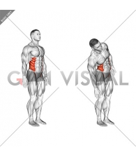 Spine (Lumbar) - Lateral Flexion - Articulations