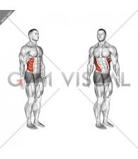 Spine (Lumbar) - Rotation - Articulations