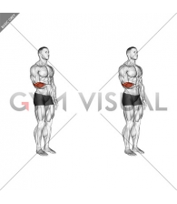 Wrist - Extension - Articulations