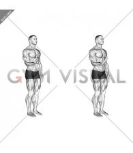 Wrist - Flexion - Articulations