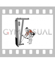 Cable Bent Over Reverse Grip Row