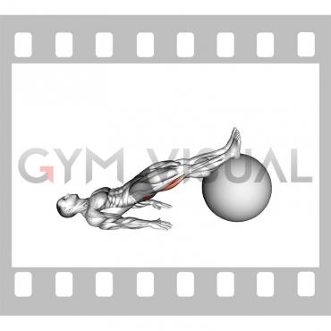 Exercise Ball Leg Curl