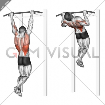 Rocky Pull-Up Pulldown