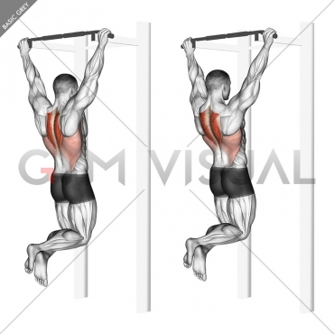 Scapular Pull-Up