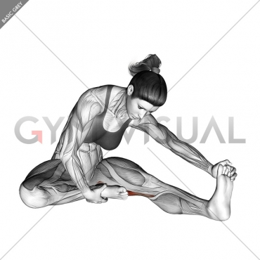 Seated Single Leg Hamstring Stretch