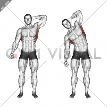 Standing Lateral Stretch