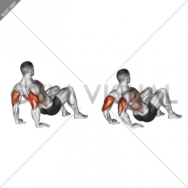 Triceps Dips Floor