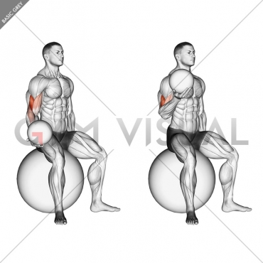 Weighted Seated Bicep Curl  (on stability ball)