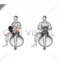 Weighted Seated Twist (on stability ball)