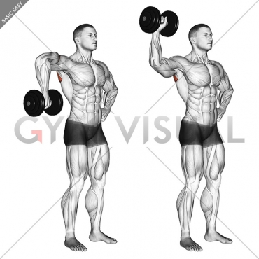 Dumbbell Upright Shoulder External Rotation