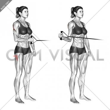 Band standing external shoulder rotation