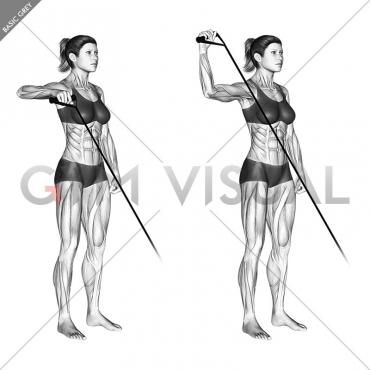 Band Upright Shoulder External Rotation