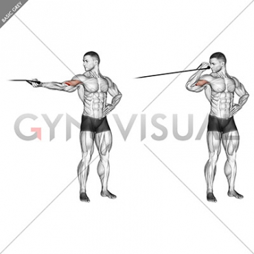 Band one arm overhead biceps cur