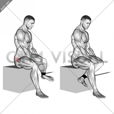 Band Seated Hip External Rotation